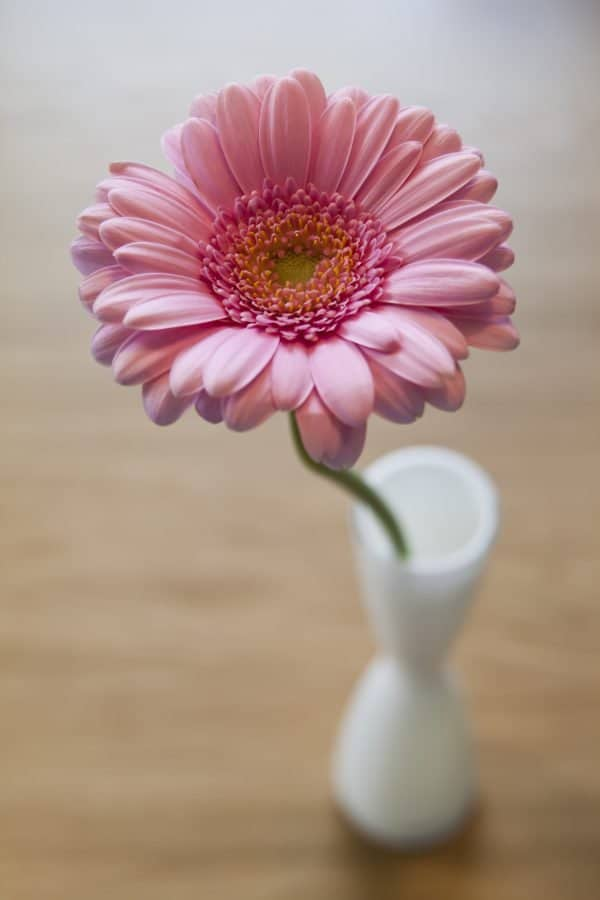 Pink flower (c) Björn Fogelberg