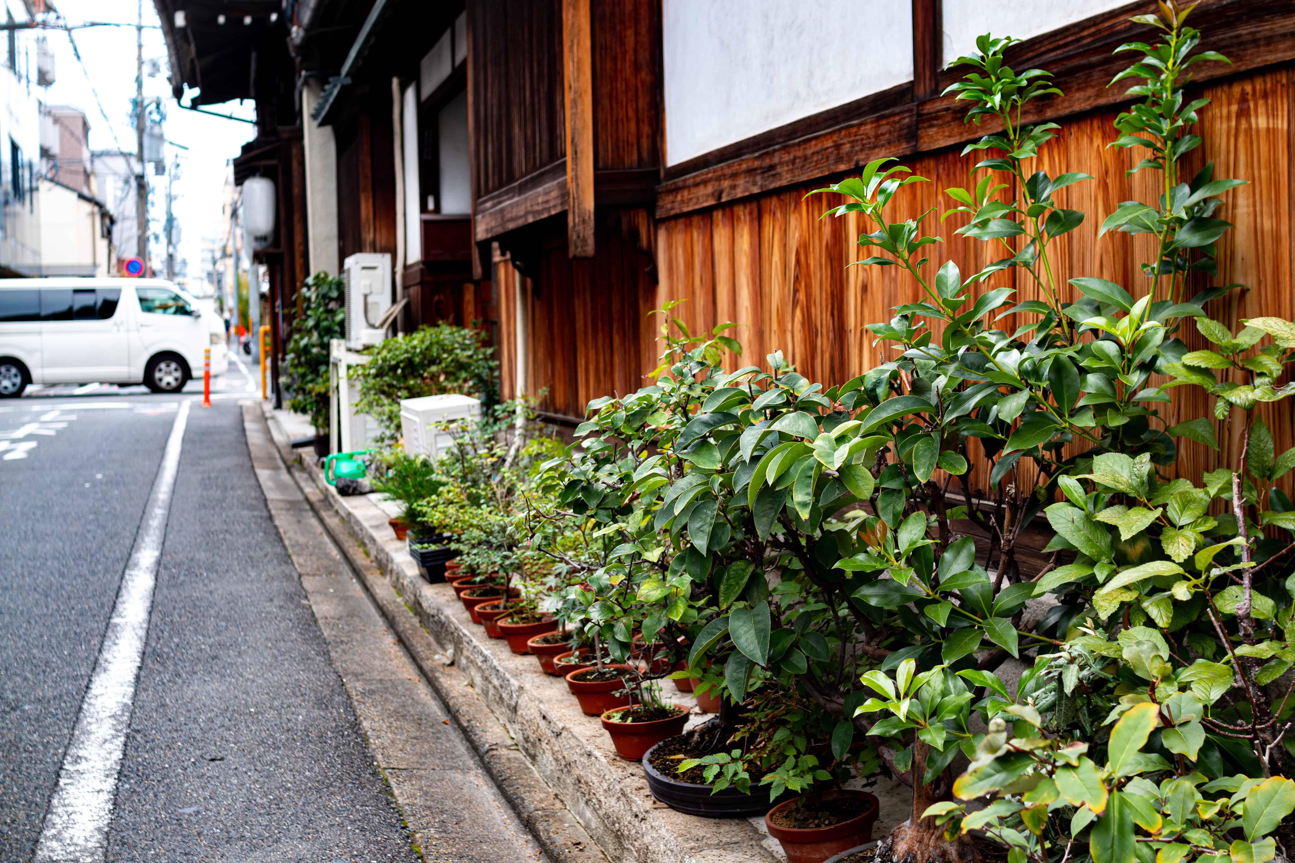 Kyoto mini garden