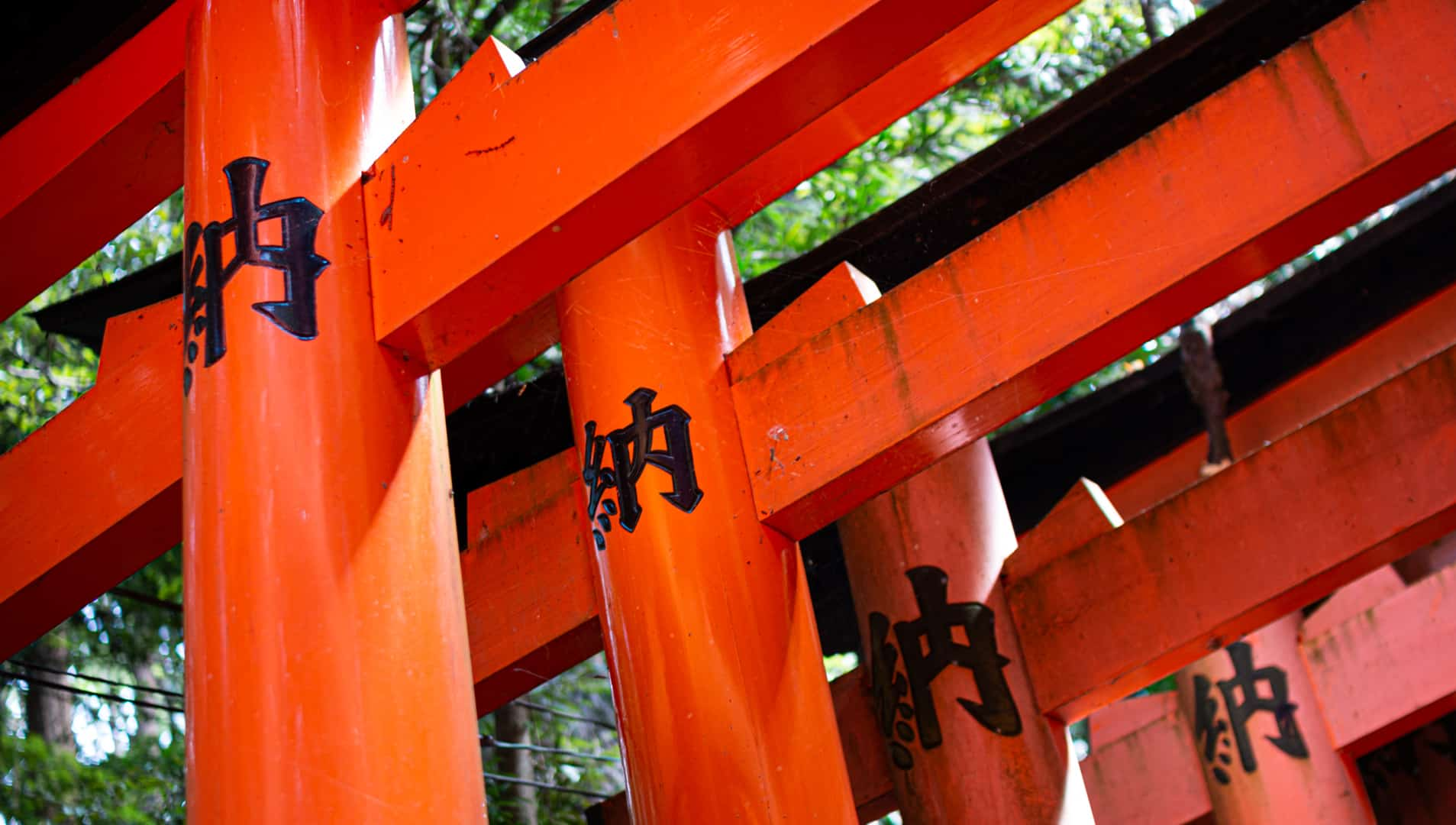 Red gates at Fushimi Inari